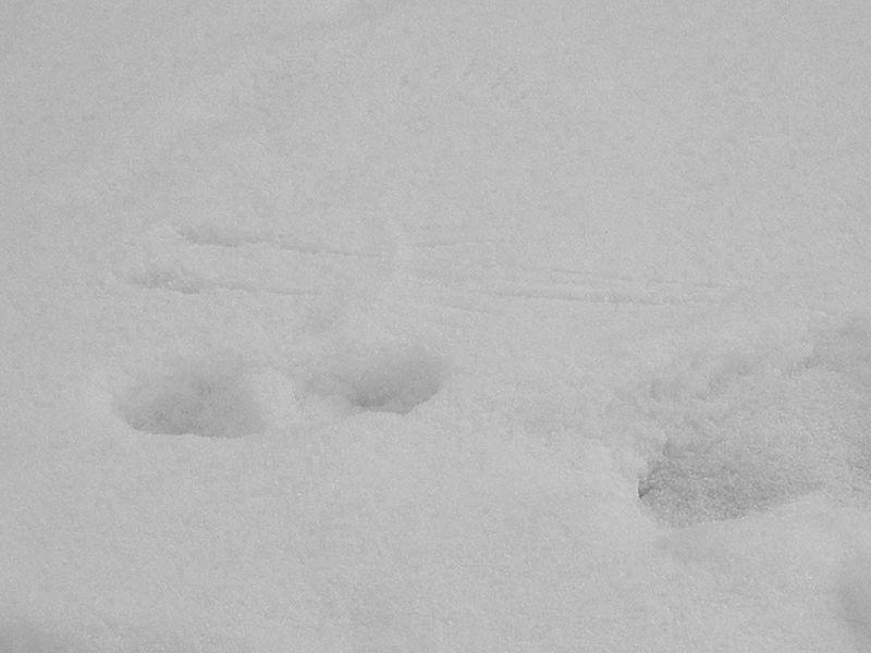 Footsteps19