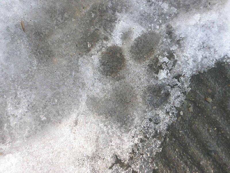 Footsteps5