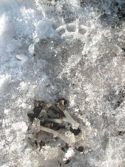 Footsteps7