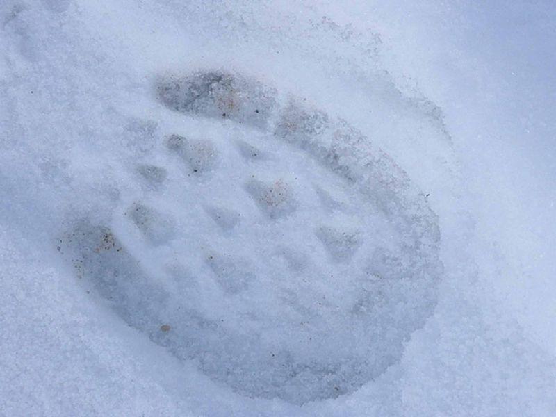 Footsteps11