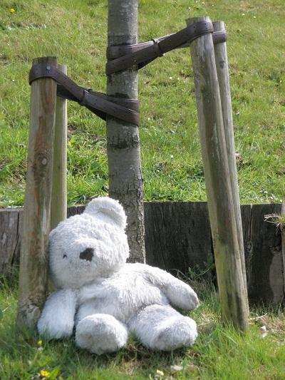 Lost_bear1