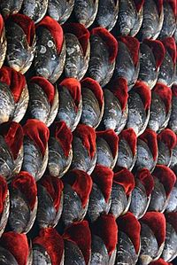 Close-up of wall covered in shells and red velvet